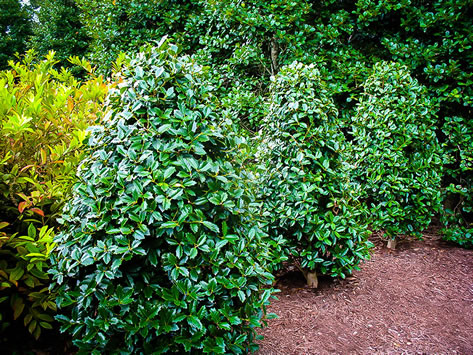 Don T Let Your Trees And Shrubs Dry Out This Winter